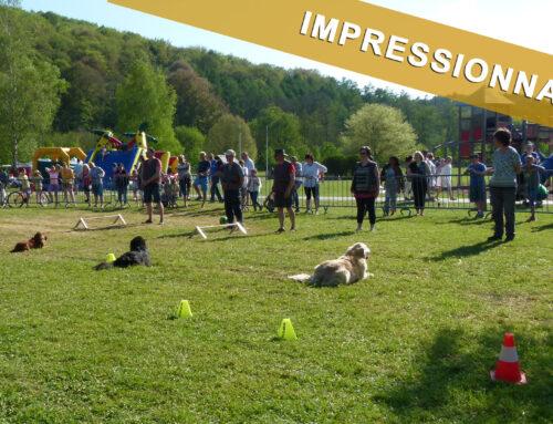 Jeudi 10 mai 2018 – Démonstration d'obéissance canine – Le club des chiens joyeux de Custinne